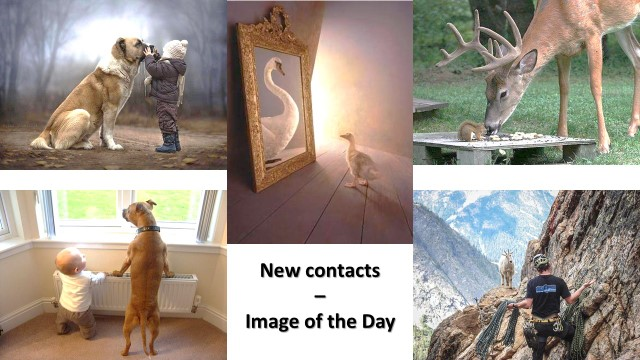 New contacts - Image of the Day